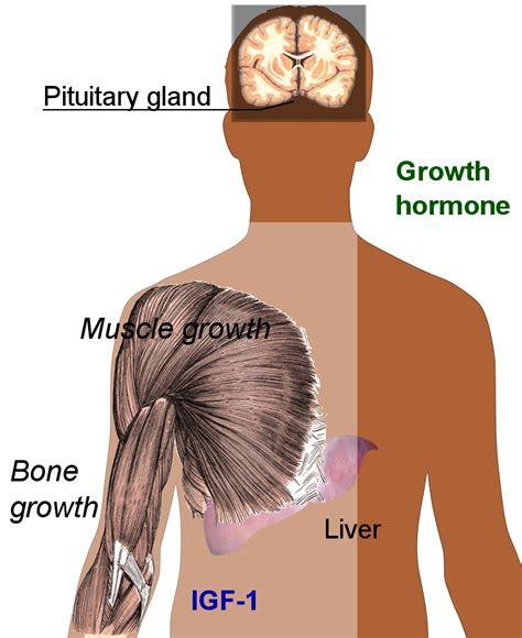 hgh human growth hormone hormona del crecimiento humano picture 1