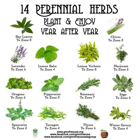 which herbal plant is best for an picture 5