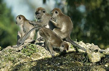 monkey sex online picture 2