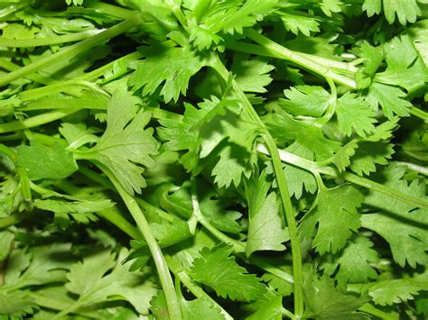 libido herbs picture 2