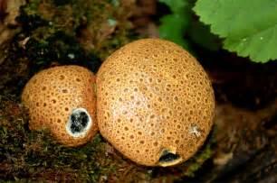 fungi mushrooms picture 2