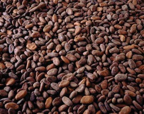 coffee seed oil benefits picture 9