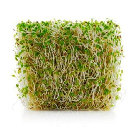 alfalfa supplements picture 3
