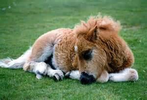 pony sleeping picture 6