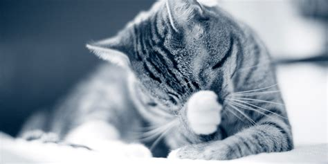 feline h cleaning picture 9