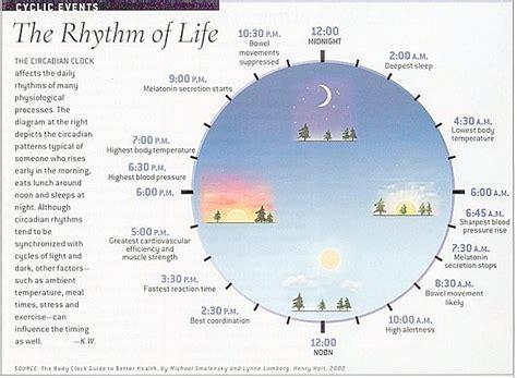 circadian sleep rhythm picture 17