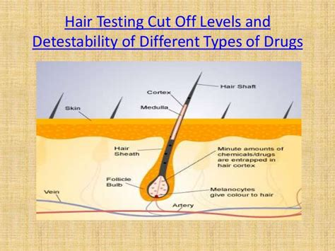 hair follicle drug test cost in wa picture 11
