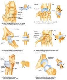 types of joints picture 11