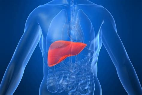 pictures of the human liver picture 10