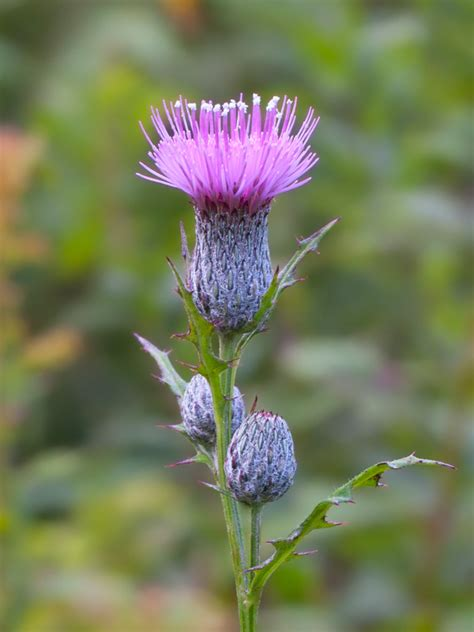 tim thistle picture 1