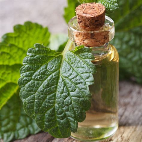 natural tinctures for herpes picture 19
