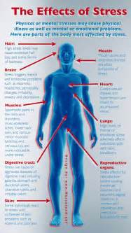 effect of stress on colon picture 2