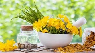 herbal medicines s pigsa picture 7