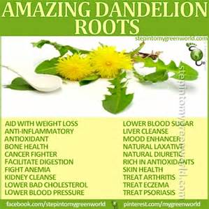 benefits of dandelion tea picture 1