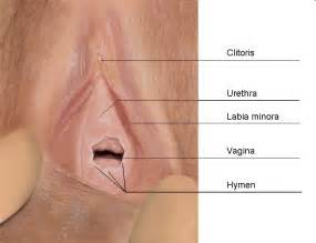 anatomy pakistan male penis picture 15