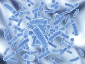 why are we not inundated with bacterial infections picture 10