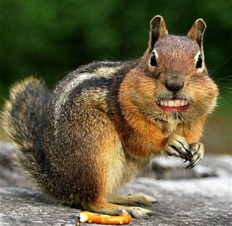 squirrel teeth picture 1
