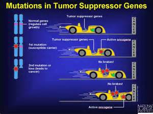tumor suppressor genes tumor promoting genes oncogenes picture 7