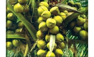 mele enhance product in sri lanka picture 7