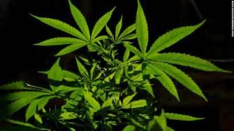 marijuana picture 7