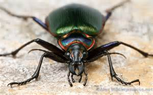 insect picture 18