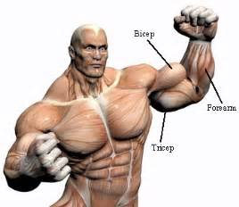 build muscle in the picture 5