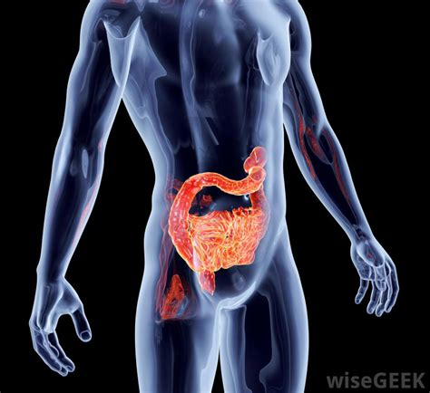 intestinal bacteria infection picture 17