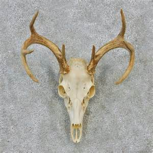 deer skull and h picture 7