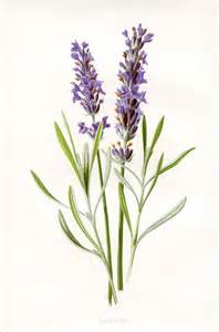 printable herbal clipart picture 3