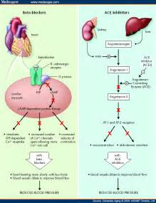 Tenenolol on circulation and blood sugar picture 7