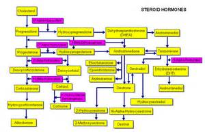 testosterone production from cholesterol picture 13