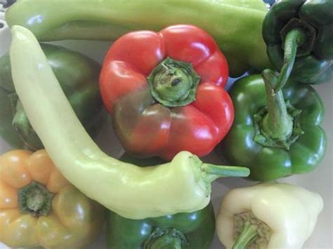 cheyenne peppers use in diet picture 17