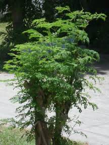 the life tree herbs reviews picture 1