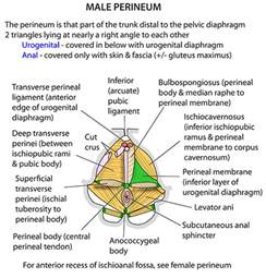 diagrams of nerve supply to thyroid gland picture 6