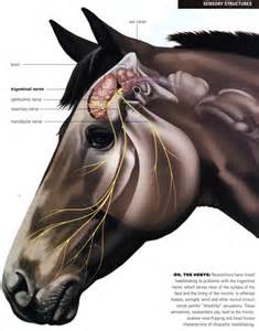 equine pain relief therapy picture 6