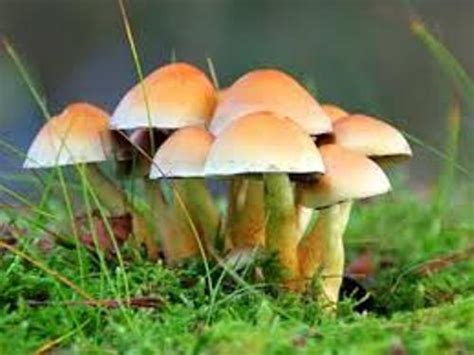 facts about fungi picture 7