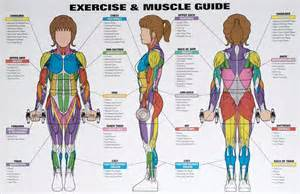 exercising muscle groups picture 5