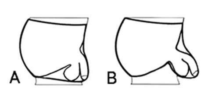 penis comparison chart picture 2