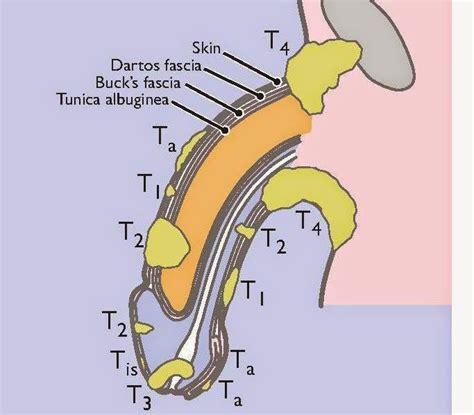 nursing penis discussion picture 10