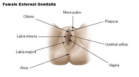 female urethra picture 3