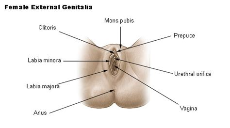diagram of small penis ina vagina picture 17