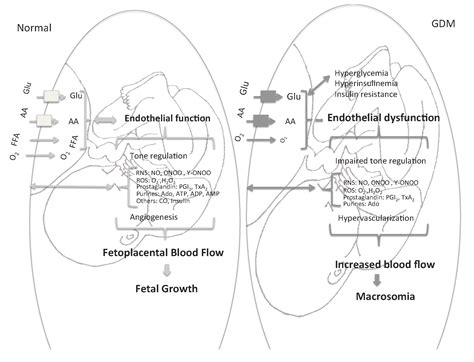 causes of decreased placental blood flow picture 16