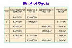 testosterone cycle in body picture 6