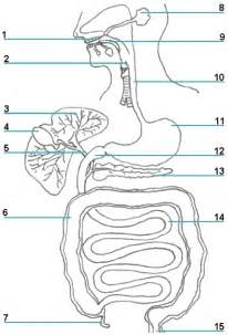 digestive quiz answers picture 1