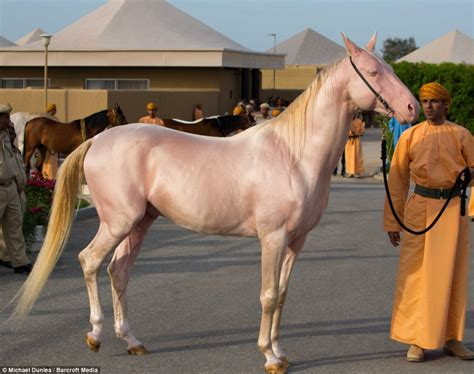 horses skin and coat picture 7