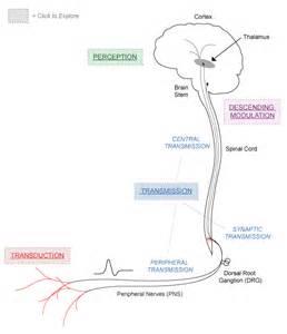 standard process artiritis pain picture 13