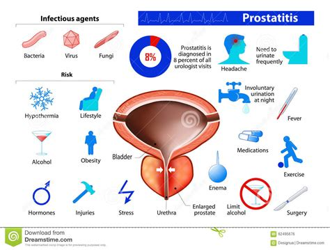 Free prostate picture 10