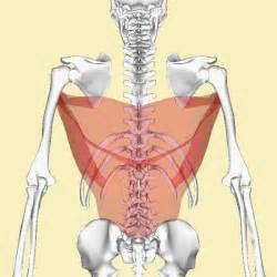 list of agonist and antagonist muscles picture 9
