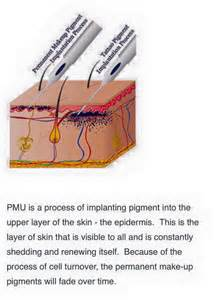 dermal layer of the skin picture 7