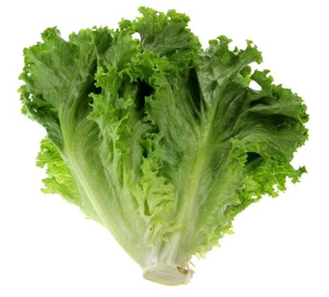 is green leafy lettuce good for people with picture 3